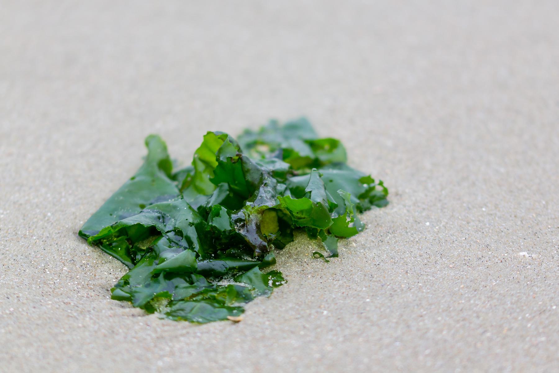 algen am strand, borkum