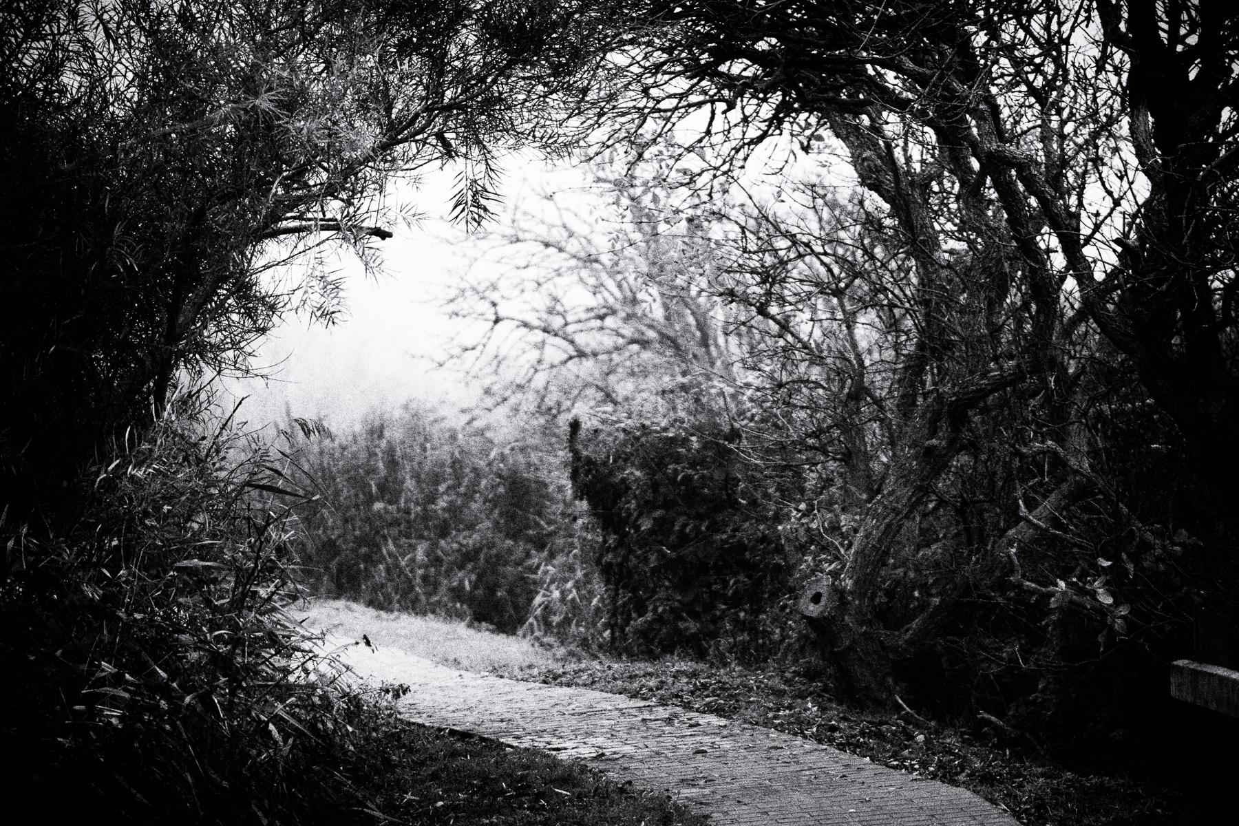 zugang zum hexenwald, borkum im nebel
