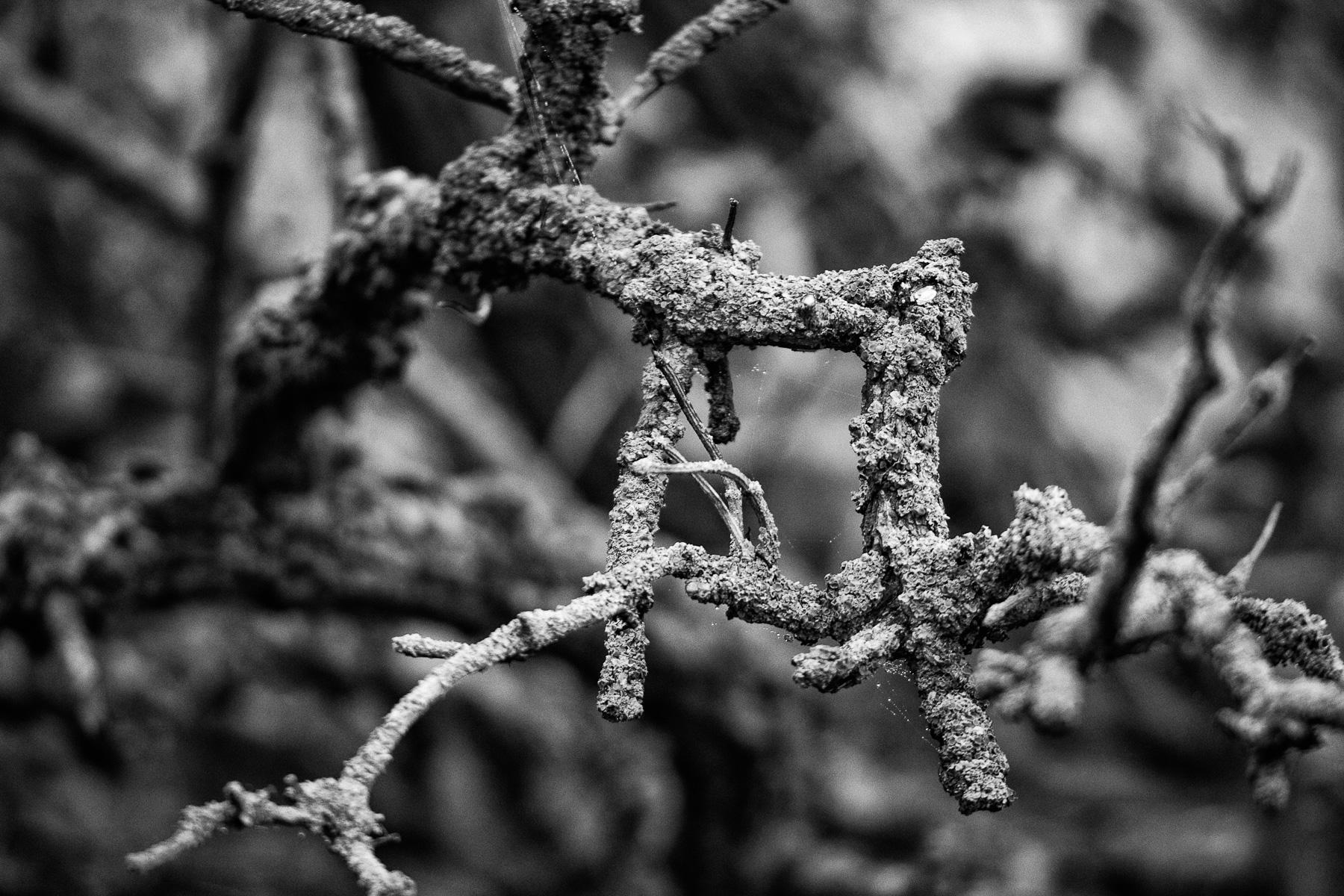 im hexenwald, borkum im nebel