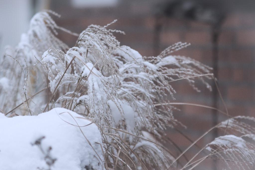 schneespielerei