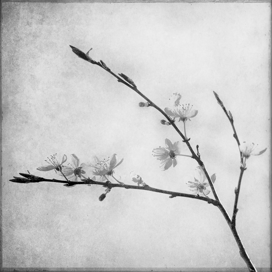 japanese spring 2