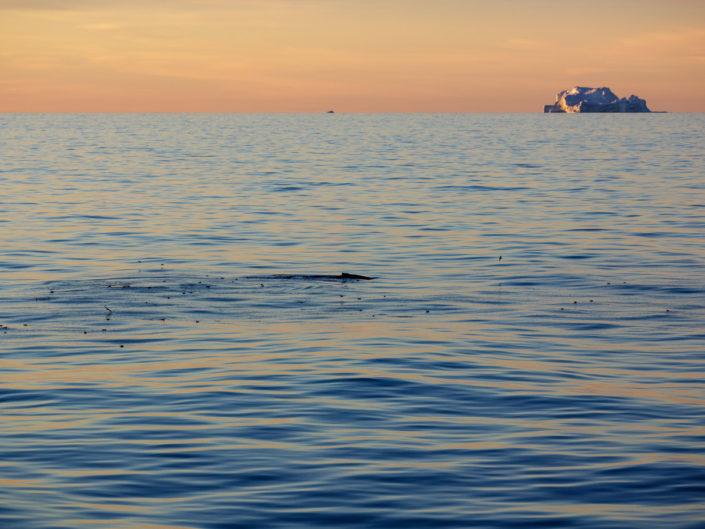 und als wenn das nicht schon schön genug wäre - plötzlich taucht ein buckelwal auf