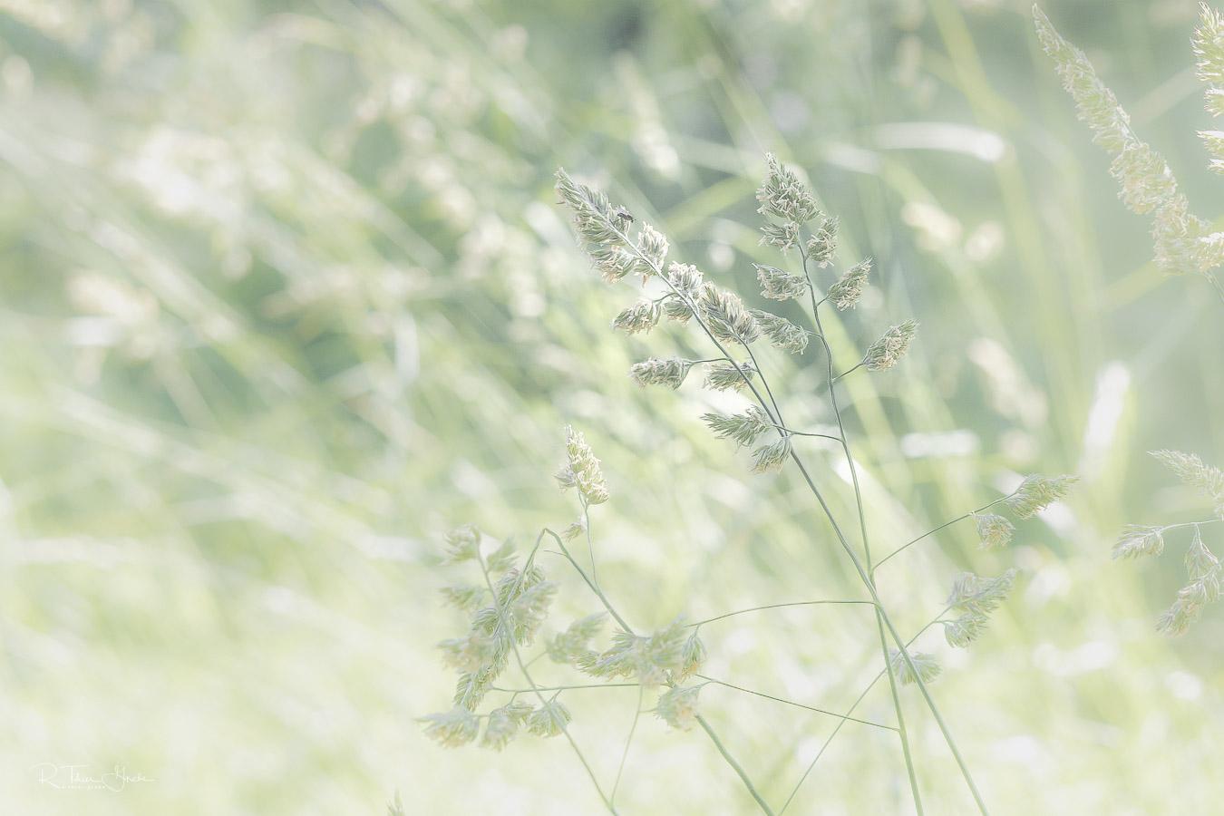 teil des paares: die grünen