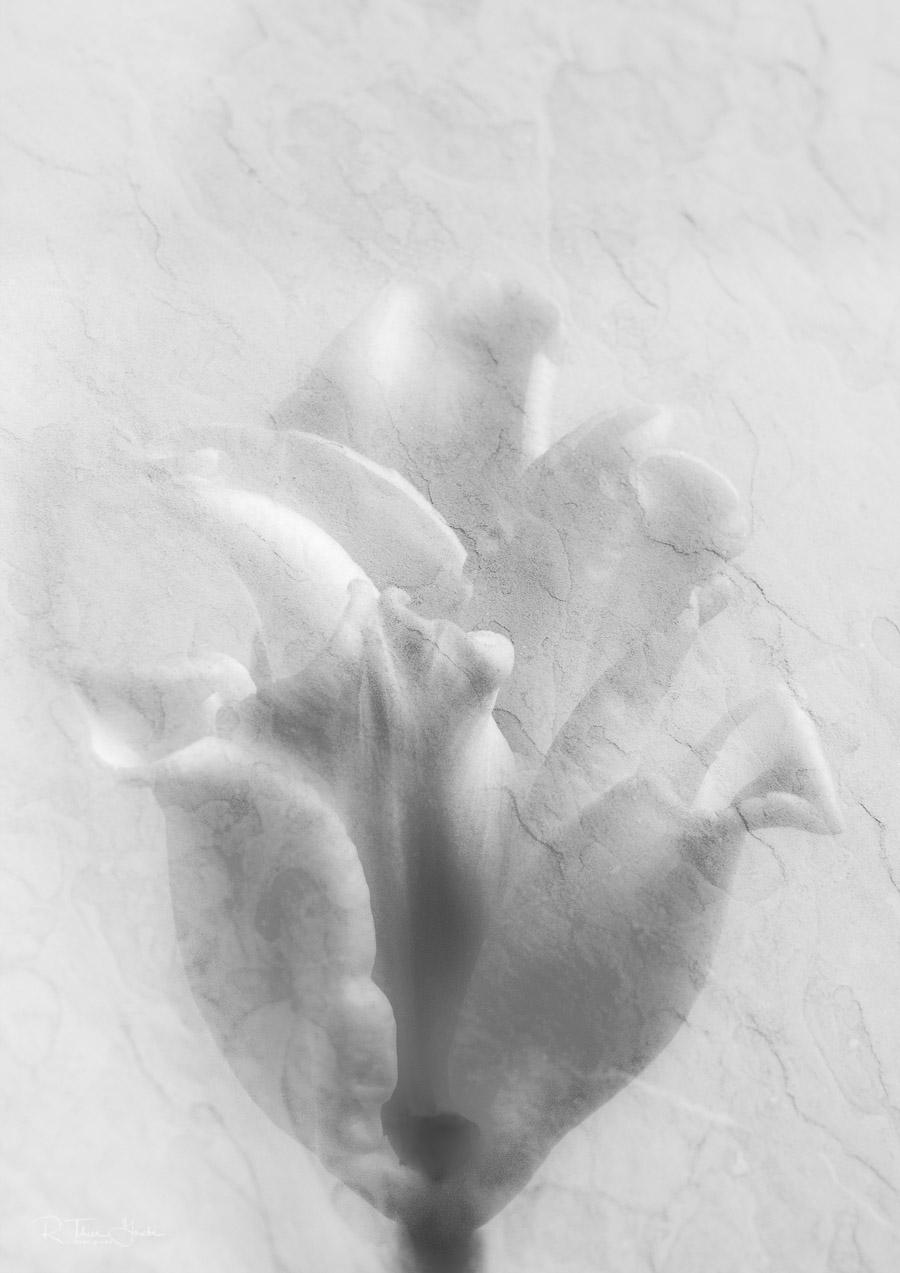 teil des paares: versteinerte skulpturen