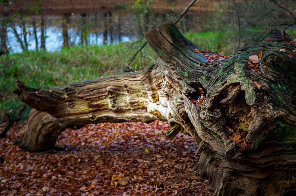 Vergänglichkeit im Ihlower Forst